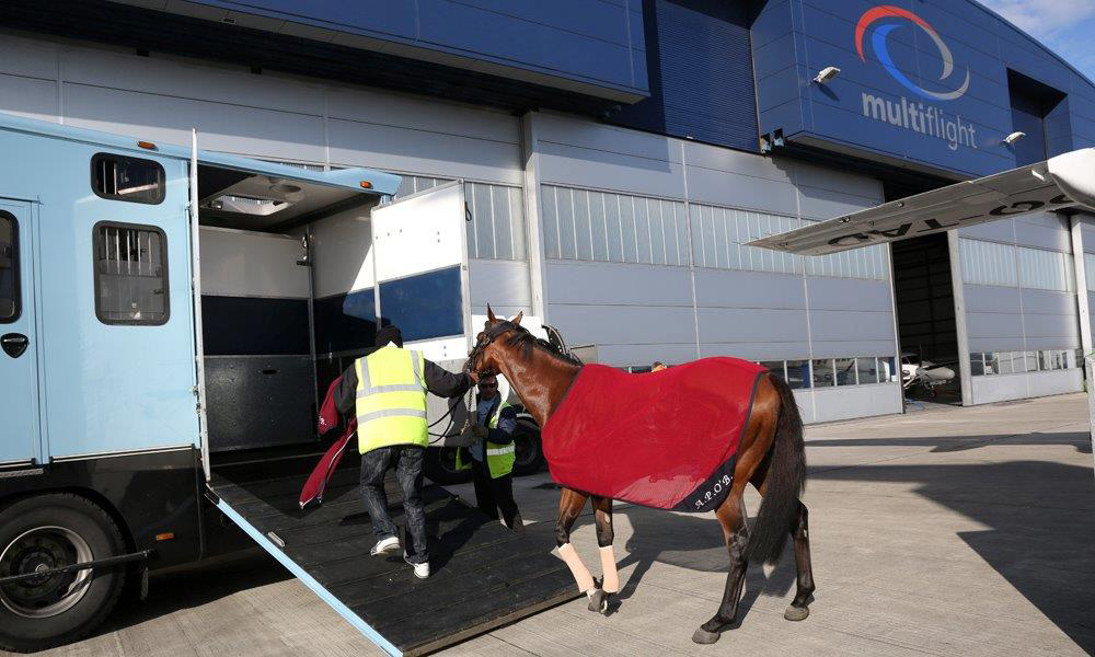 Multiflight Services Pet Travel Horse Box