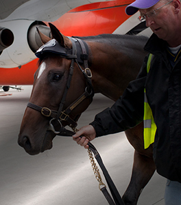 Multiflight Services Pet Travel Horse